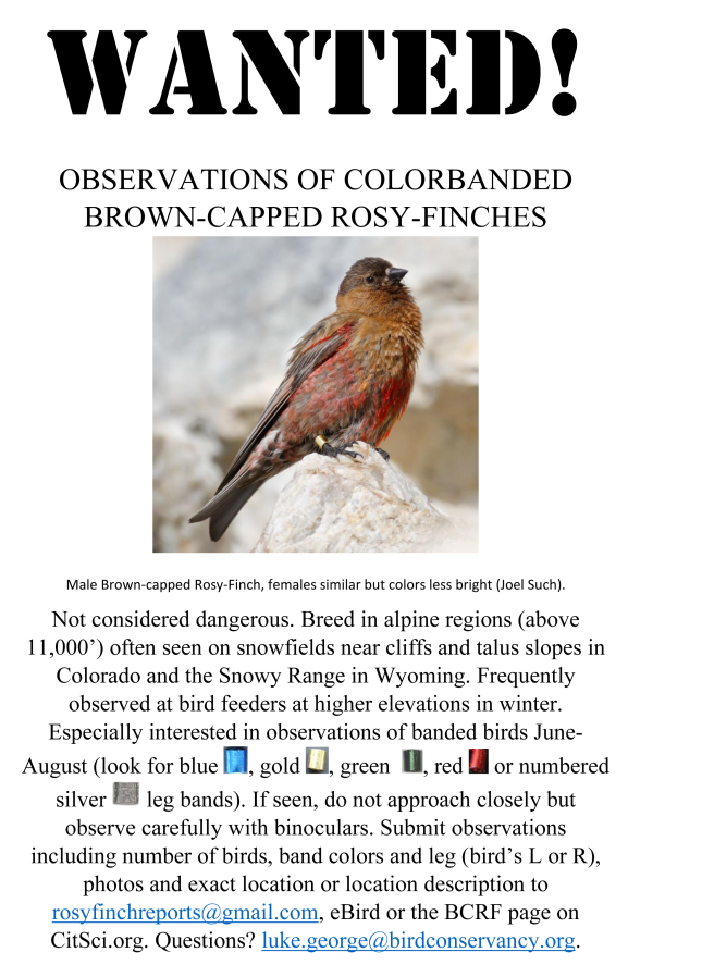 Black-capped Rosy Finches - WANTED!